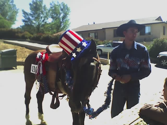 uncle-sam-horse